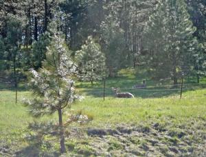 2 Elk